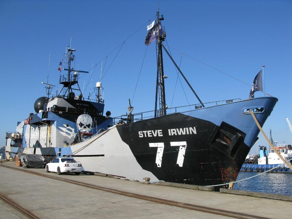 Steve Irwin - Williamstown II